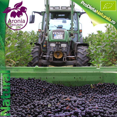Aronia Original Fructe plantatie in Germania