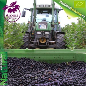 Aronia Original Fructe Germania
